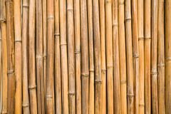 Bamboo wall. Stock Photography