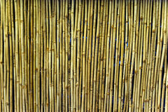 Bamboo Wall. A line of bamboo strips forming a textured wall royalty free stock photo