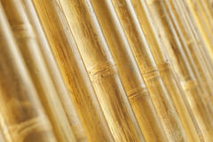 Bamboo wall background Stock Photography