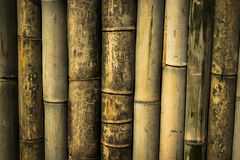 Bamboo wall background and texture Stock Photos