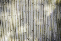 Bamboo wall background, texture. In the garden Stock Image
