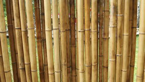 Bamboo wall for backgrounds. Bamboo fence for backgrounds and textures tree Royalty Free Stock Images