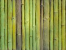 Bamboo wall. Green bamboo wall close-up macro Stock Photo