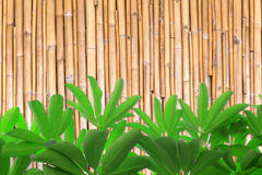 Bamboo wall with green leaf Stock Photography