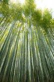 Bamboo wall. High Bamboo wall forest in Arashiyama, Kyoto, Japan Royalty Free Stock Photo