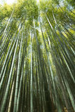 Bamboo wall Stock Photography