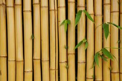Bamboo Wall with Leaves Background Stock Images