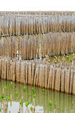 Bamboo wall in mangrove education center Stock Image