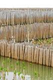 Bamboo wall in mangrove education center. At Samut Sakhon, Thailand Stock Image