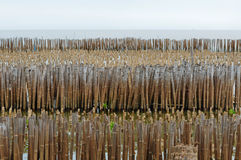 Bamboo wall in mangrove education center Royalty Free Stock Image