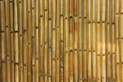 Bamboo wall. Stock Images