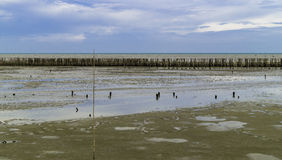 Bamboo wall protect . Bamboo wall protect scour from sea tide at seashore Stock Images
