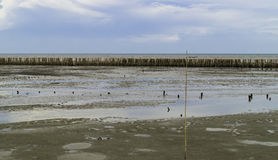Bamboo wall protect . Bamboo wall protect scour from sea tide at seashore Stock Photo