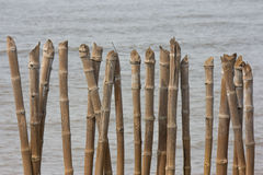 Bamboo wall in the sea Royalty Free Stock Photo