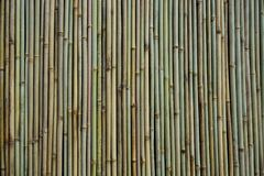 A bamboo wall, or several vertical straight bamboo sticks and textures. Full frame close up view of a bamboo wall, or several vertical straight bamboo sticks and stock photos