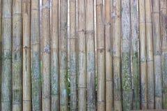Bamboo wall. Bamboo slender straight into the wall Stock Photo