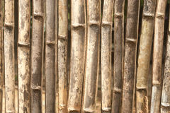 Bamboo wall texture. Stock Photography