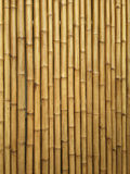 Bamboo. Wall texture and  background Stock Photo