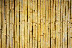 Bamboo wall texture and background. Stock Image