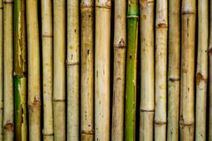 Bamboo wall texture background., close up. 23/01/2018 Stock Image
