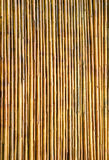 Bamboo wall texture background. Dry bamboo wall texture background stock photo