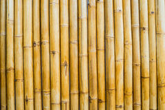 Bamboo Wall textures at field Stock Images
