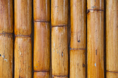 Bamboo wall. Royalty Free Stock Images