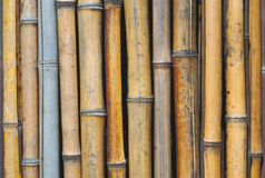 Bamboo wall vertical background pattern Stock Photography