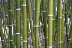Bamboo Wallpaper Royalty Free Stock Photo
