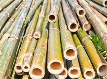 Bamboo was cut Royalty Free Stock Photography