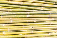Bamboo was cut Stock Photo