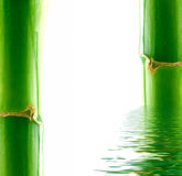 Bamboo and water. Royalty Free Stock Photos