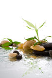 Bamboo and water. Bamboo and stones on the water Stock Images