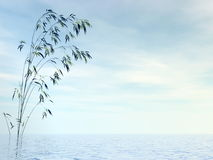 Bamboo and water - 3D render Stock Photo