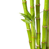 Bamboo with water drop on white background Royalty Free Stock Photos