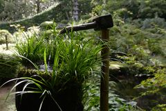 Bamboo water feature Kyoto. With lots of vegetation Royalty Free Stock Photo