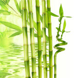 bamboo and water reflection