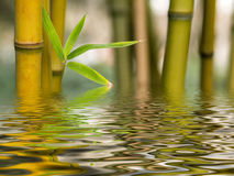Bamboo water reflection stock photos