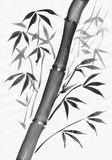 Bamboo black and white study Royalty Free Stock Photos