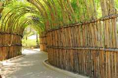Bamboo way Stock Image