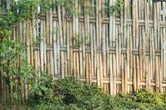 Bamboo weave. The abstract background from the bamboo weave Royalty Free Stock Photos