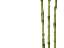 Bamboo on white. Lucky Bamboo isolated on white background Royalty Free Stock Photo