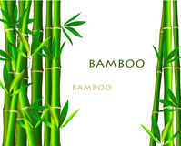 Bamboo  on white background Stock Images