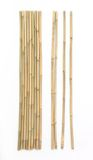 Bamboo on white background Stock Photo