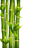 Bamboo on a white background Royalty Free Stock Images