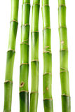 Bamboo on white isolated background Stock Images