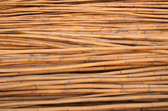 Bamboo wood Stock Image
