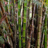 Bamboo wood Royalty Free Stock Photography
