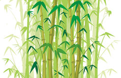 Bamboo wood - background Stock Photo