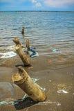 Bamboo wood on the beach. Sea stock photos